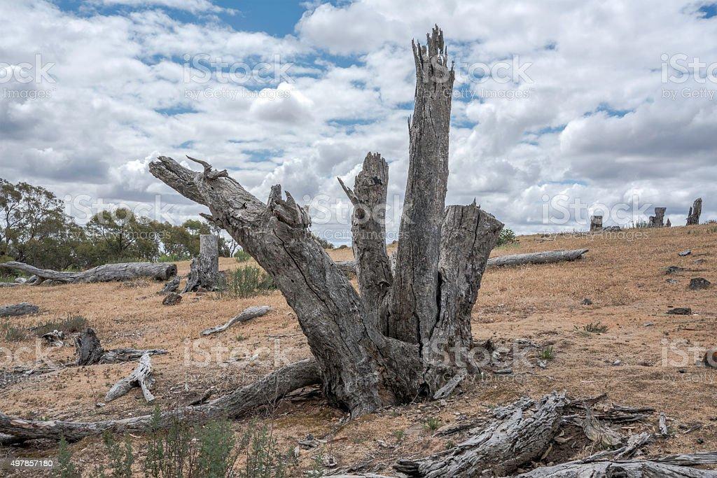 Dead tree in the Australian backyard stock photo