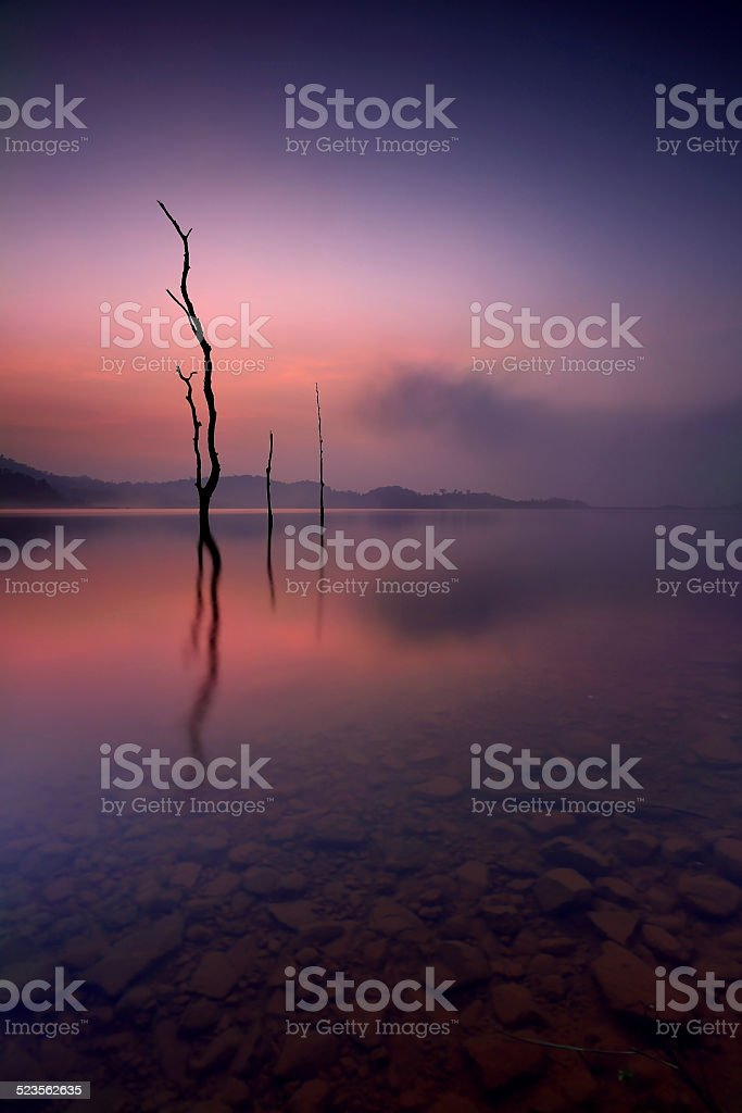 dead tree in the lake stock photo