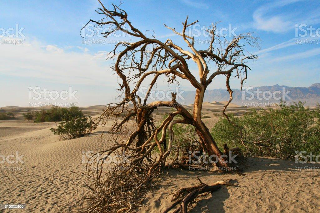 Dead tree in the Mojave desert - Death Valley California stock photo