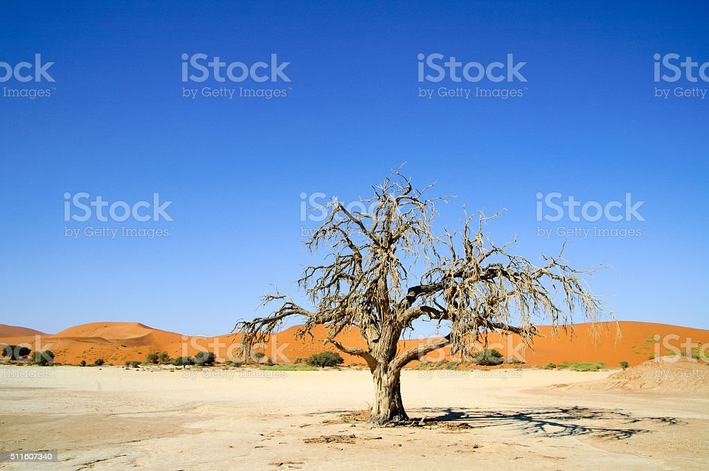 Dead tree in the Namib Desert, Namibia stock photo