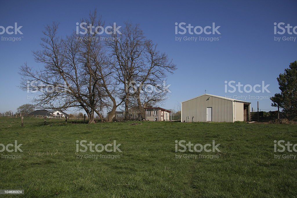 Dead Tree in the pasture stock photo