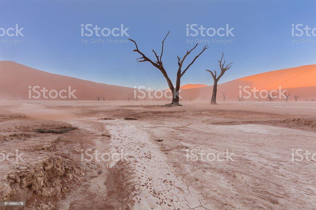 Dead Tree in Vlei stock photo