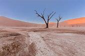 Dead Tree in Vlei