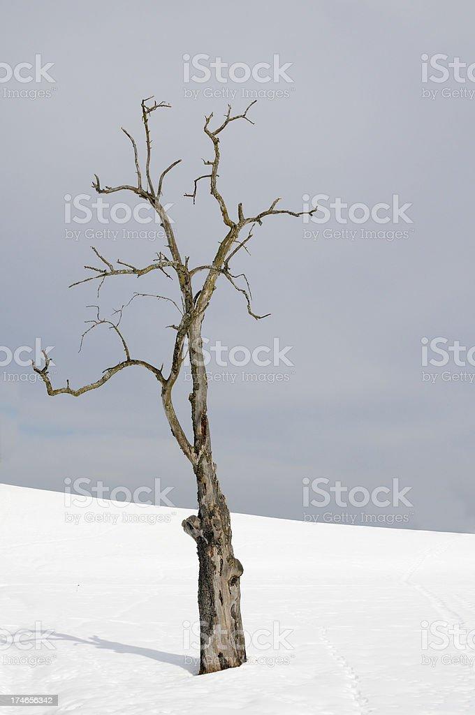 dead tree in winter scene stock photo