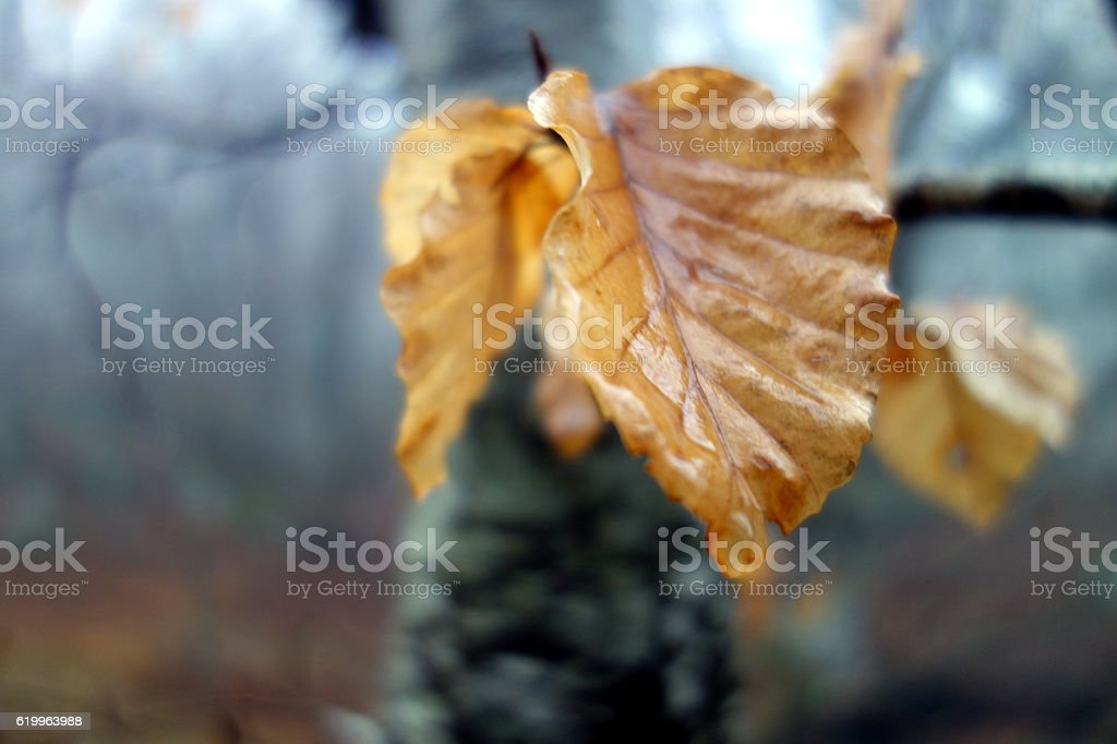 Dead Tree Leaves in Autumn stock photo