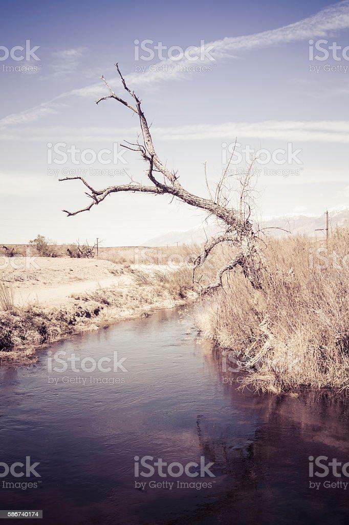 Dead tree near water stock photo