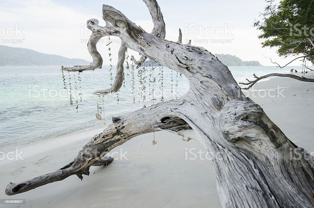 Dead tree on a beach at sunshine royalty-free stock photo