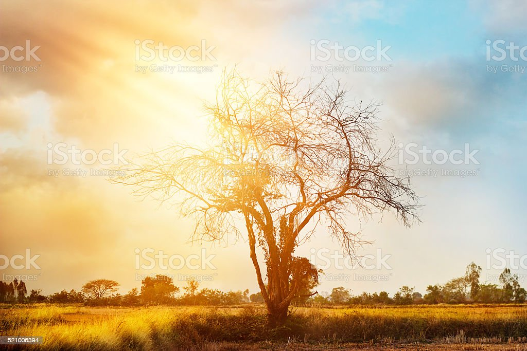 dead tree on colorful sunset background stock photo