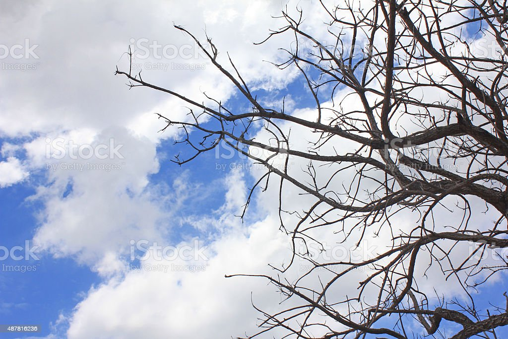 Dead tree on The blue sky stock photo