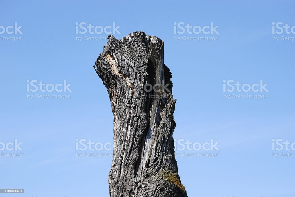 dead tree royalty-free stock photo
