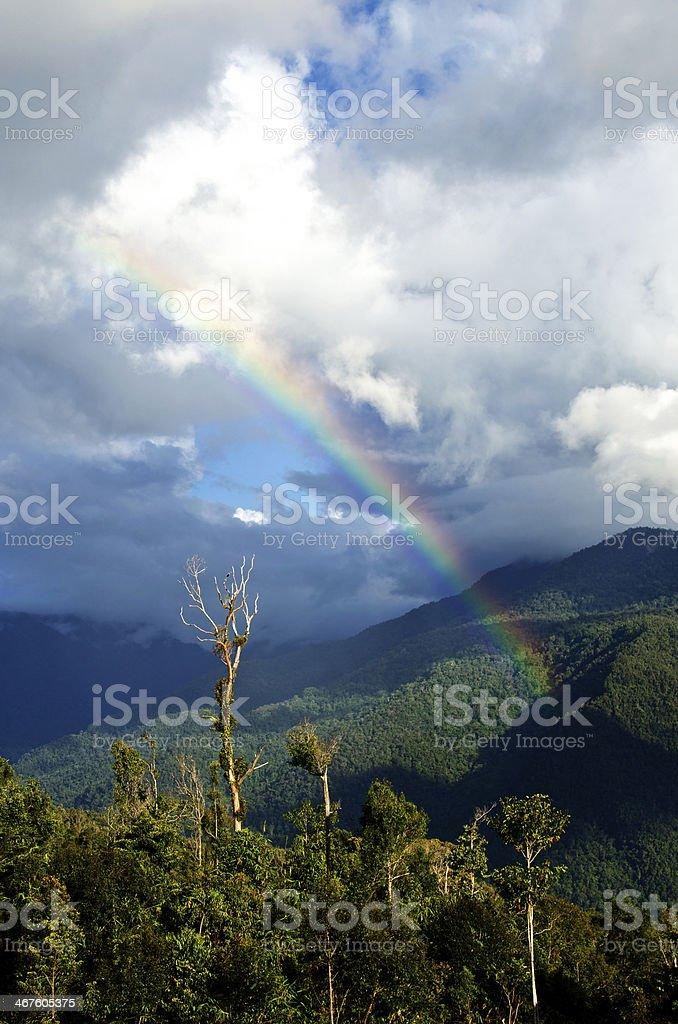 Dead Tree Rainbow - New Guinea stock photo