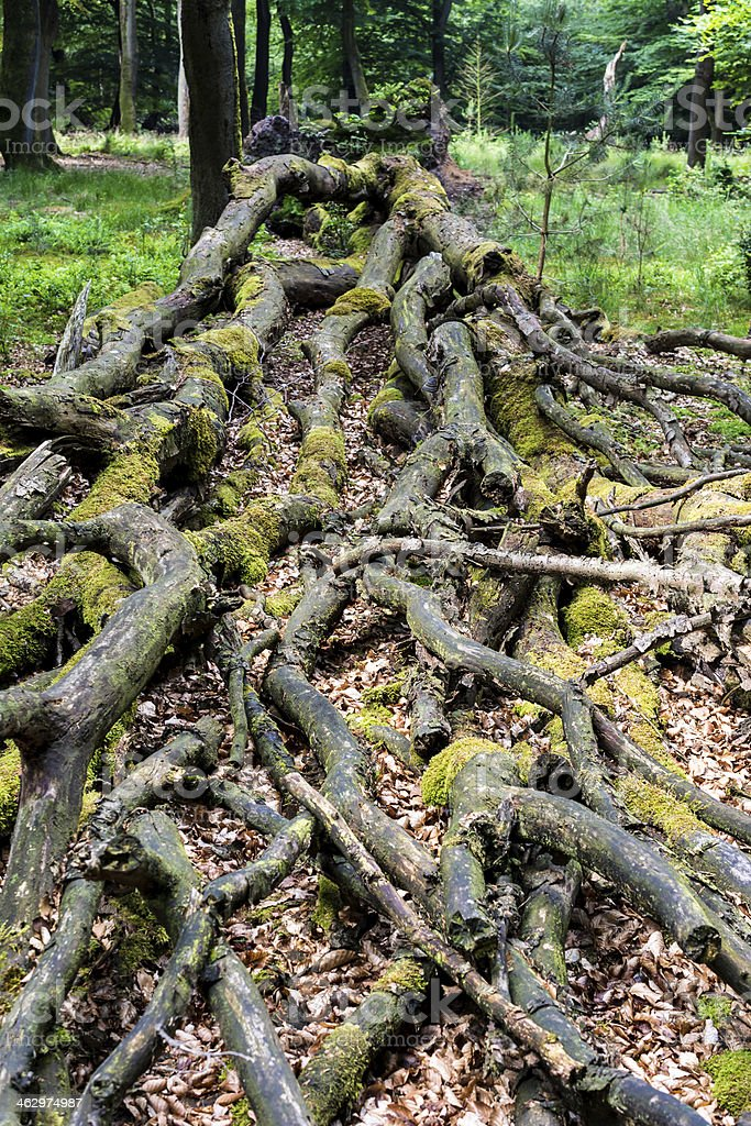 dead tree reabsorbed into the ground stock photo