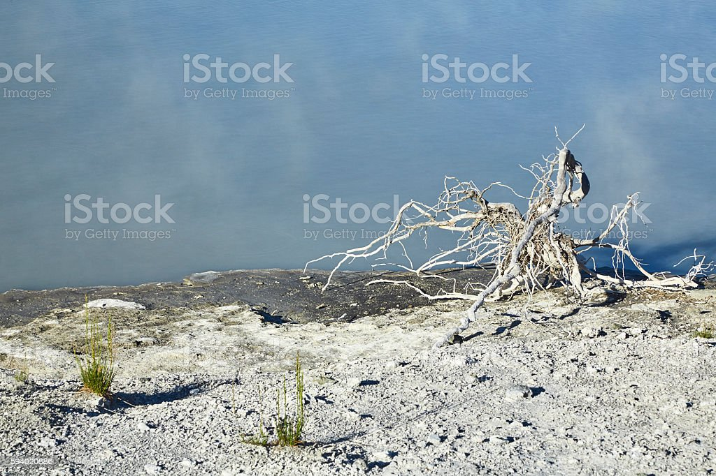 Dead Tree Root Near Hot Pool, Yellowstone National Park, Wyoming stock photo