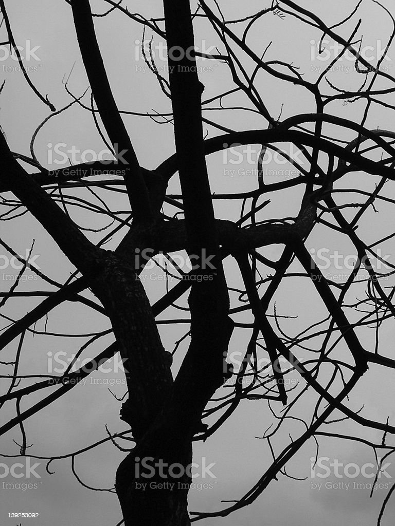 dead tree silhoutte stock photo