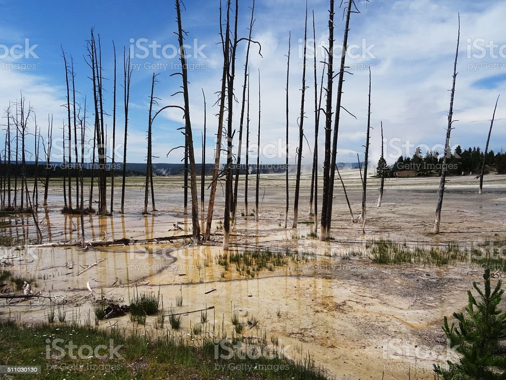 Dead tree skeletons in colored hydrothermal spring. stock photo