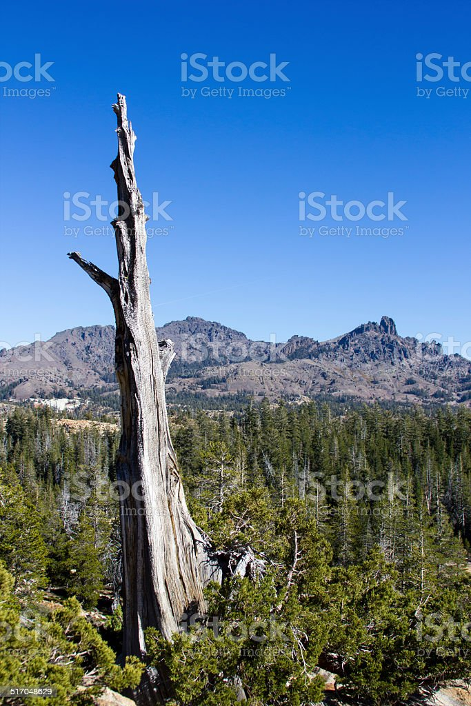 Dead tree standing out amongst a landscape stock photo