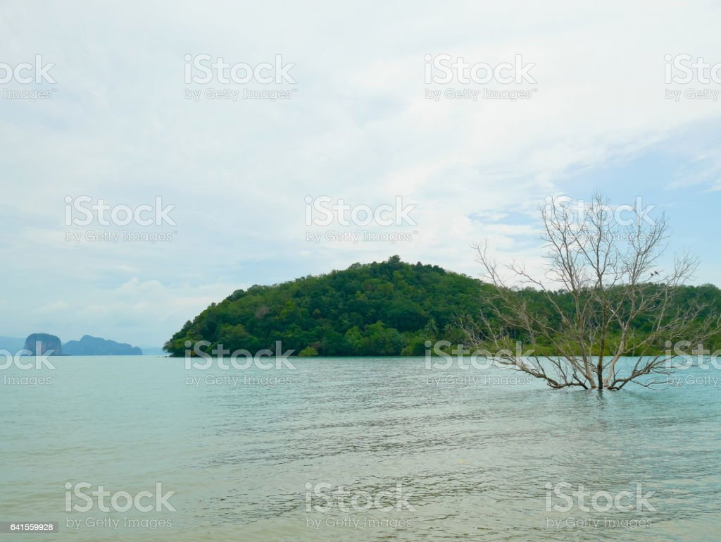 Dead tree stands alone in the sea stock photo