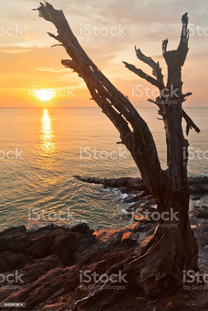 Dead tree trunk on tropical beach stock photo