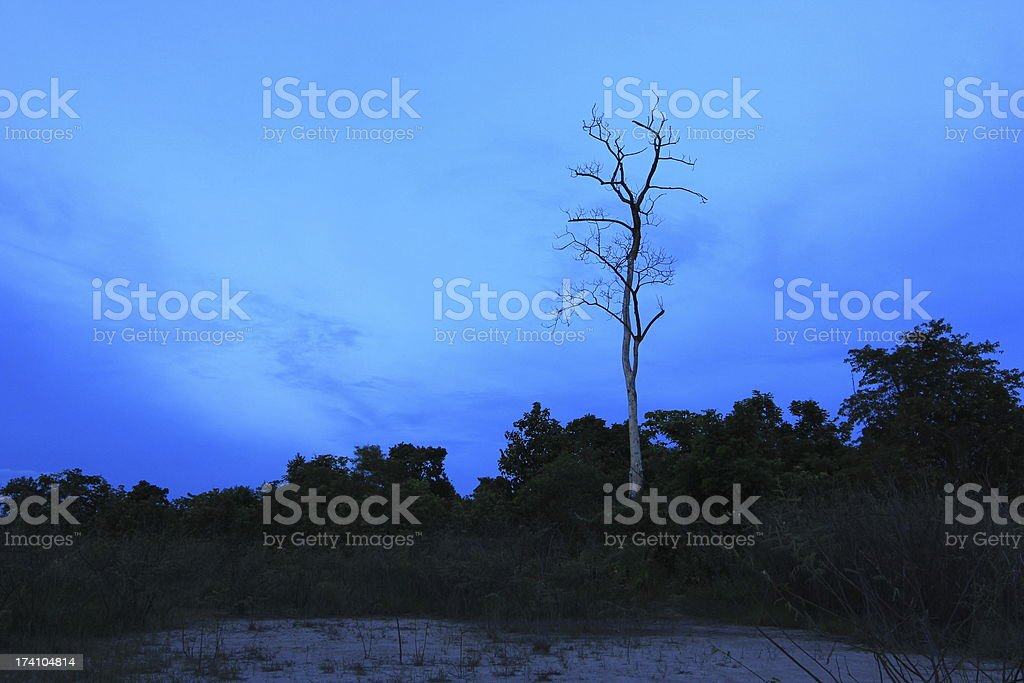 dead tree with blue sky royalty-free stock photo