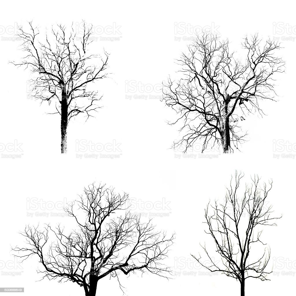 Dead Tree without Leaves royalty-free stock photo