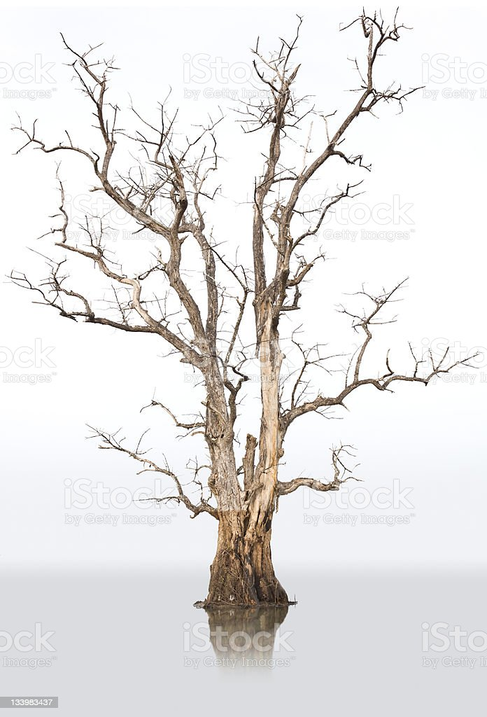 Dead trees and dry. stock photo