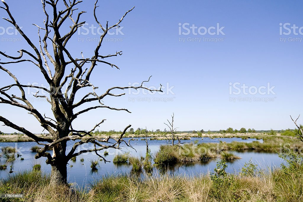 Dead trees at a lake stock photo