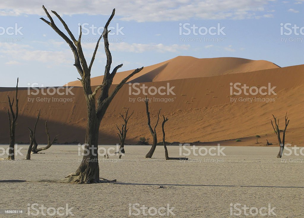 Dead trees at Sossusvlei Namibia royalty-free stock photo