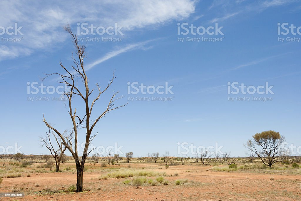Dead Trees in Arid Enviroment,Australian Outback royalty-free stock photo