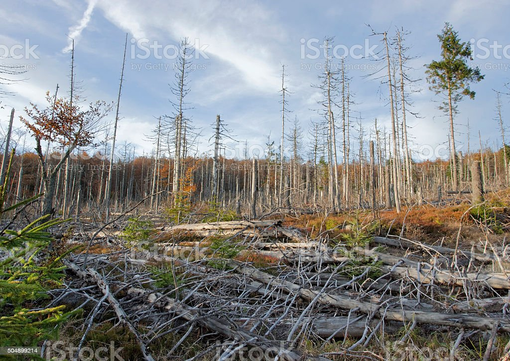 Dead trees in Bavarian forest because of acid rain stock photo