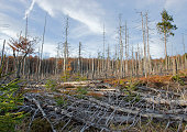Dead trees in Bavarian forest because of acid rain
