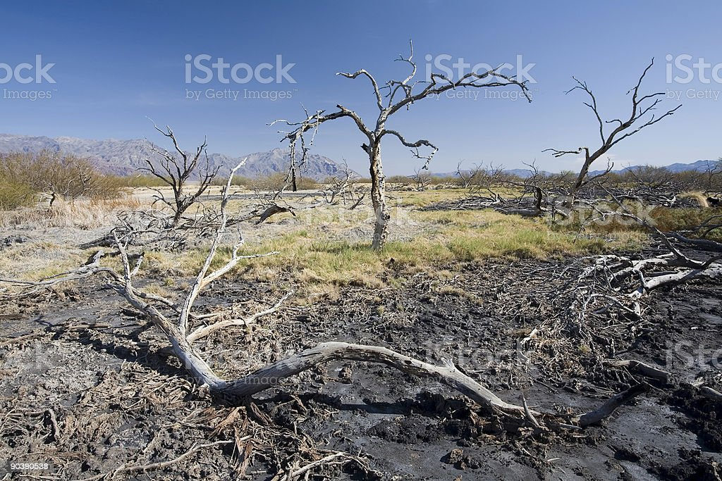 Dead Trees in Death Valley stock photo
