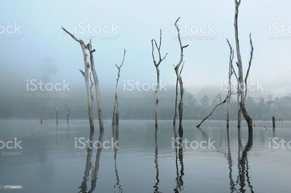 Dead trees in lake stock photo