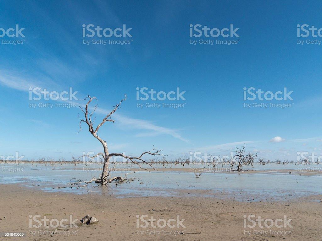 Dead Trees in Menindee Lakes, NSW, Australia stock photo