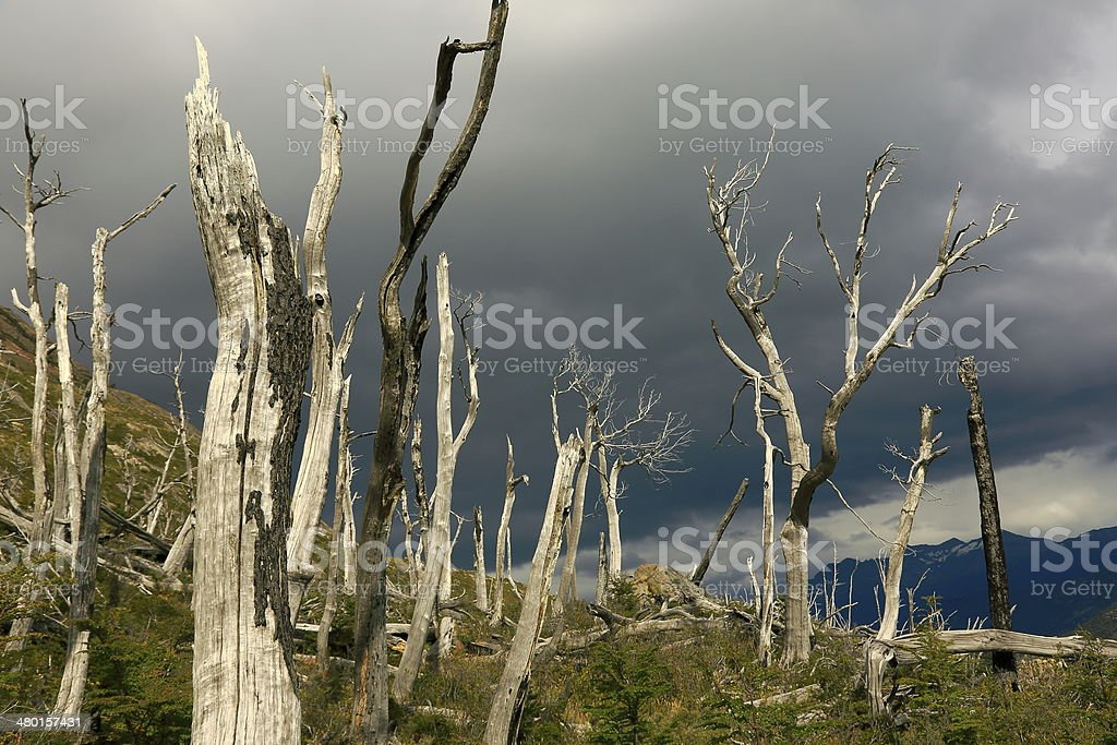 Dead trees in Patagonia dramatic sky - Chile, South America royalty-free stock photo