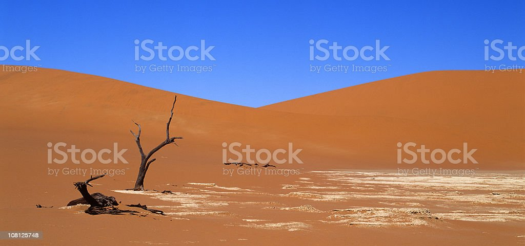 Dead Trees in Sand Dunes stock photo