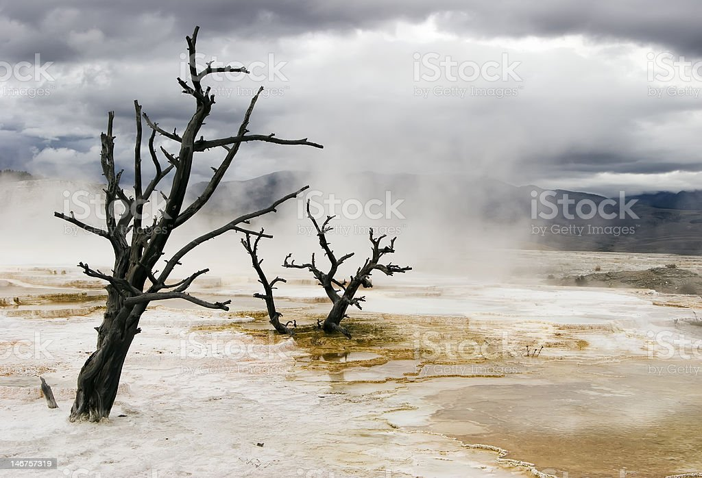 Dead trees royalty-free stock photo