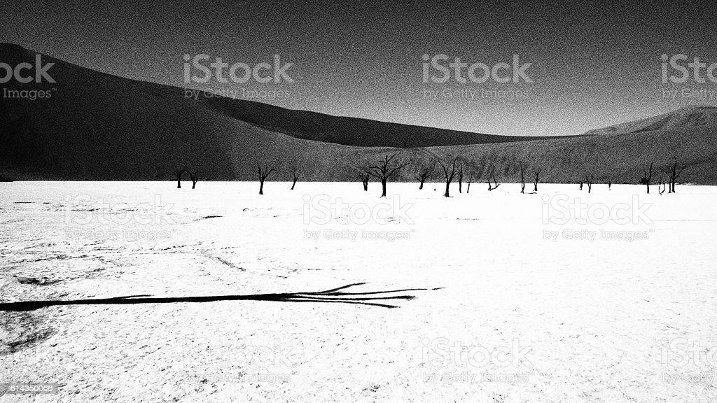 Dead trees stock photo
