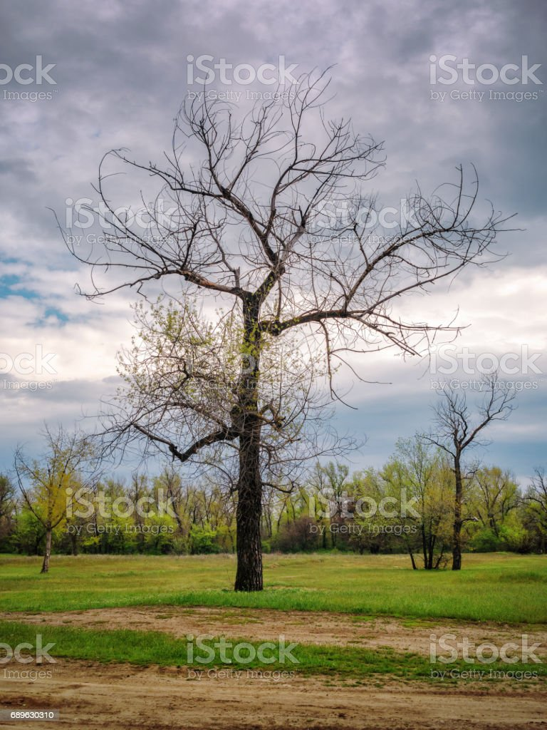 Dead trees, Volgograd, Russia stock photo