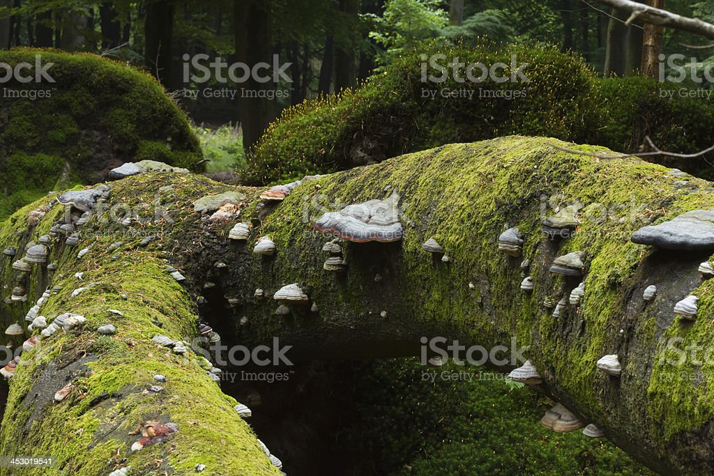 Dead trees with mushrooms and moss stock photo