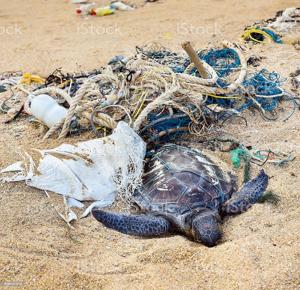 Dead turtle in fishing nets stock photo