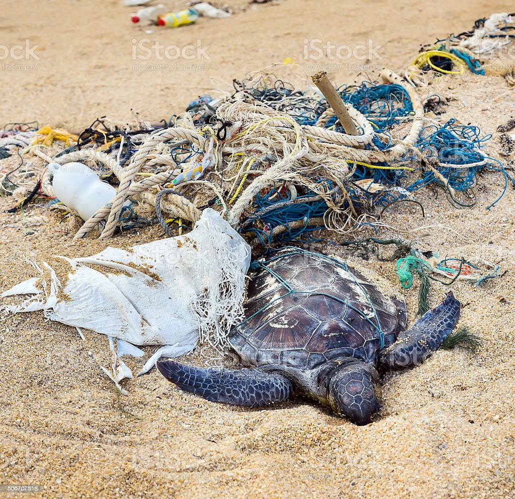 Dead turtle in fishing nets stock photo