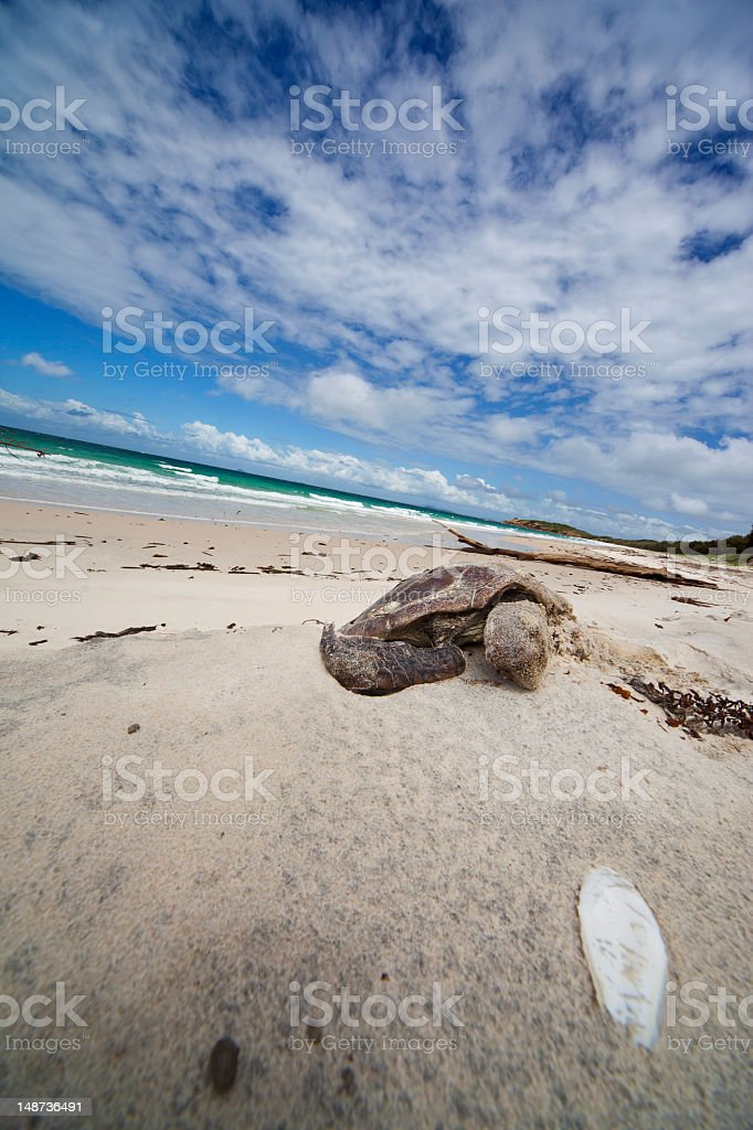 Dead turtles on the beach stock photo