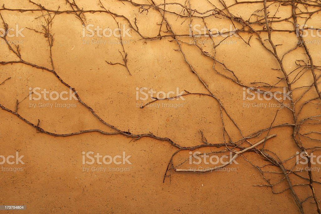 Dead Vine On Wall royalty-free stock photo