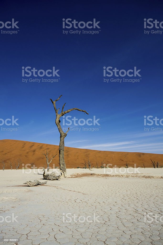 Dead vlei Sossusvlei, Namibia royalty-free stock photo