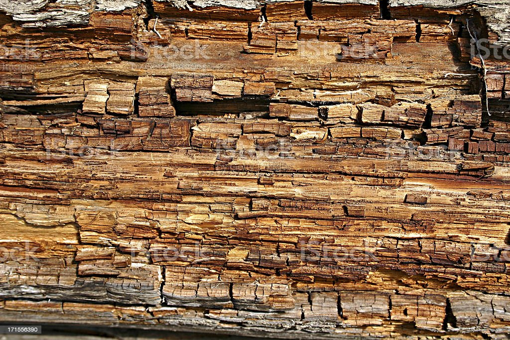 Dead Wood stock photo