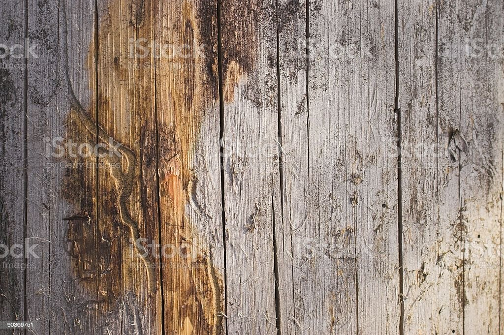 Dead wood texture royalty-free stock photo