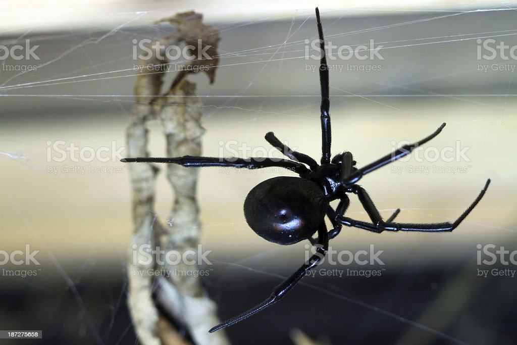 Deadly royalty-free stock photo