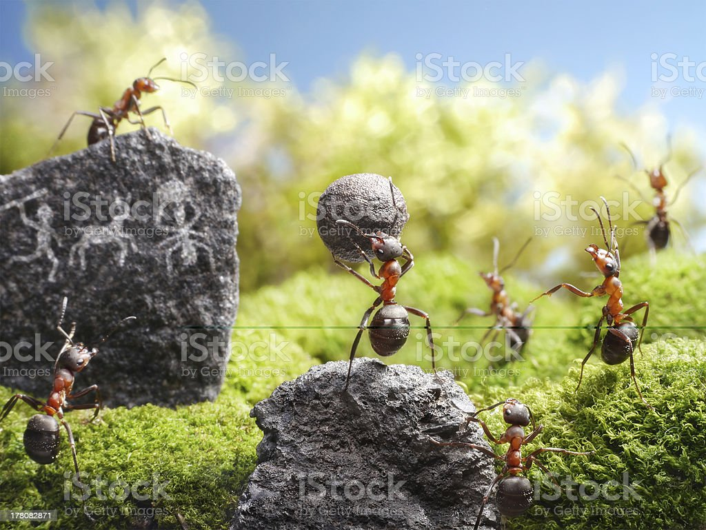 deadly weapon, ant tales royalty-free stock photo