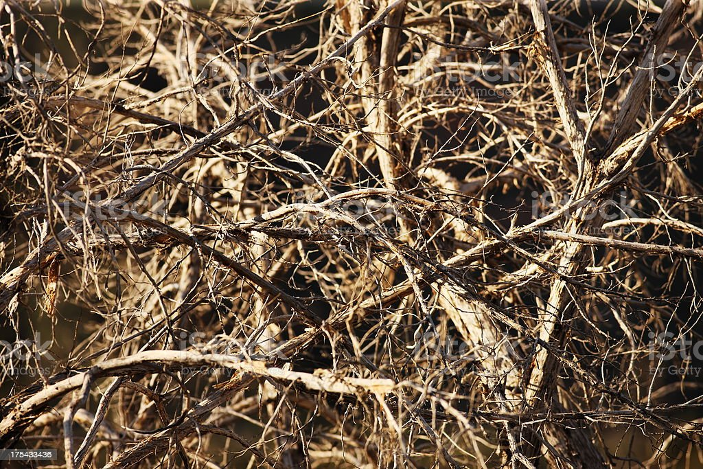 DeadTree Branch Pile stock photo