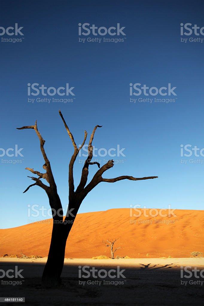 Deadvlei Acacia Tree and Sand Dunes Namibia Africa stock photo